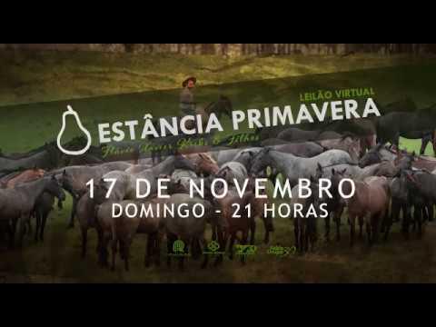 Leilão Virtual Estância Primavera - 17/11 - 21H Canal Rural
