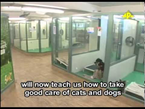 SPCA introduction