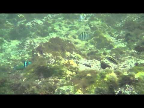 Cayman Island Under Water 2