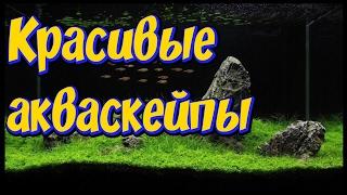 Самые красивые аквариумы мира! Акваскейп! Самые красивые  акваскейпы  мира!