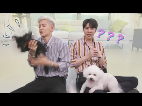 When Sehun & Chanyeol Have To Babysit Vivi & Toben
