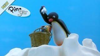 Kijk Pingu mag niet meedoen filmpje