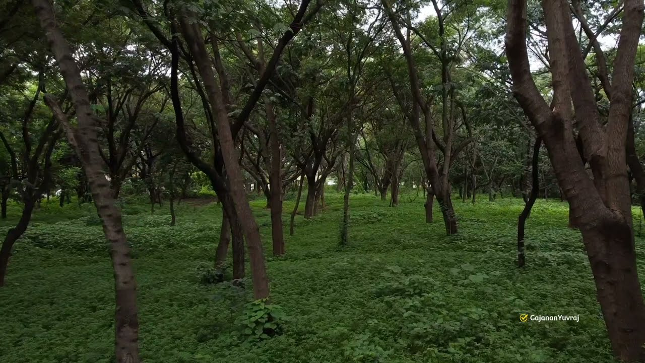 Dark Forest   FPV   DJI Mini 2   Nashik   Sula Vineyards фото
