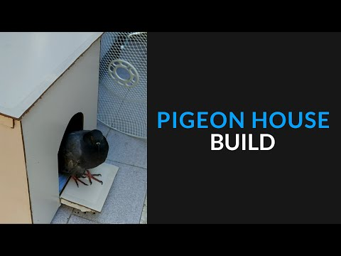 Building a Pigeon House