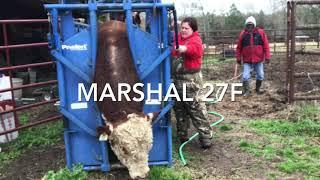 Herd Health: Registered Hereford Bull's