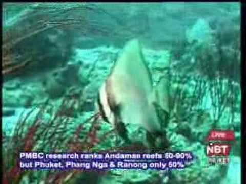 Interview on Coral Reefs in Andaman Sea
