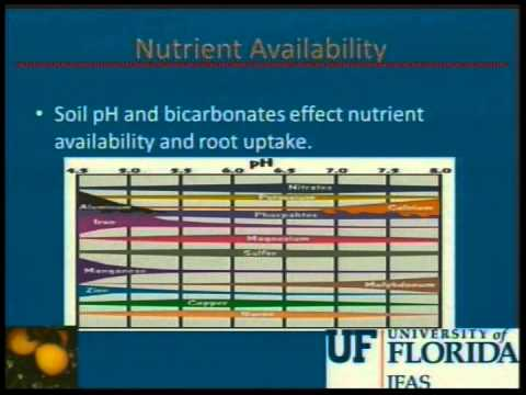 Understanding the Potential Problems with High Bicarbonates in Irrigation Water