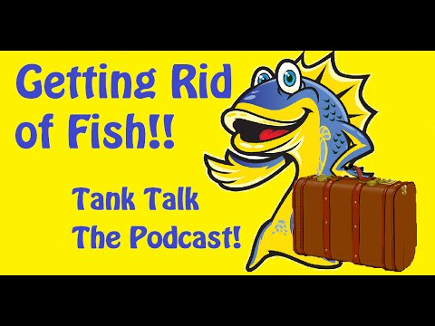 Getting rid of fish! Tank Talk the Podcast presented by KGTropicals!