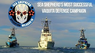 Operation Milagro IV: Sea Shepherd's Most Successful Vaquita Defense Campaign