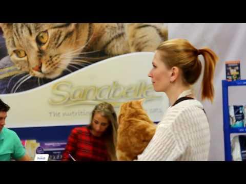 Выставка кошек 24-25 февраля 2017 года (Петрозаводск)