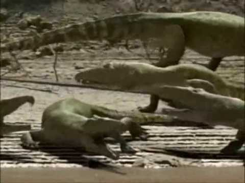 Prehistoric Crocodiles