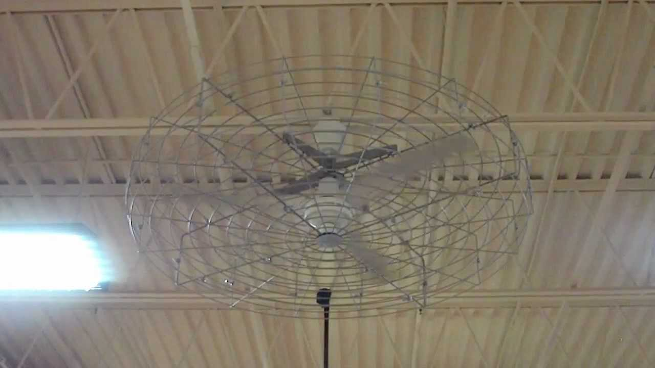 56u0026quot; White Dayton Commercial Ceiling Fan With A Cage - YouTube