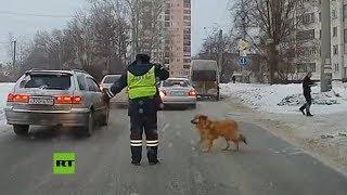 """""""¡Adelante!"""": Policía detiene el tráfico para que un perro cruce la calle en Rusia"""