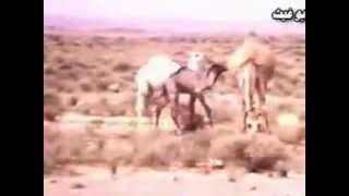 Jouf منطقة الجوف قبل حوالي ٦٠ سنة