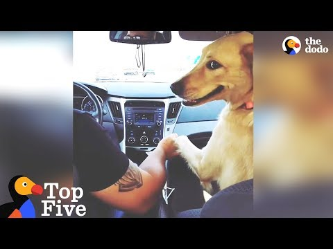 Dog Grabs Dad's Hand In The Car + Adorable Animal Videos | The Dodo Top 5
