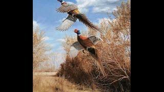 Отличная охота на фазана в Алматинской области