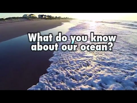 Celebrate World Ocean Day