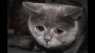 Бывшие хозяева выбросили кошек на улицу всех