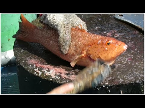 Amazing Cutting Live Fishes (Red Groupers) At Seafood Market In Hong Kong