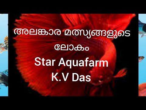 Ornamental fish farming  (STAR AQUAFARM )TRISSUR  9846117293