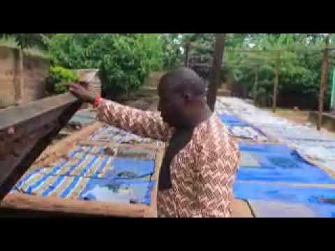 Snail Farming Tutorial in Nigeria, Edo State, Benin city.