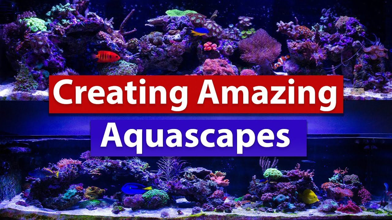 Creating Amazing Aquascapes Tips And Tricks To Building That Stunning Saltwater Reef Scape Youtube