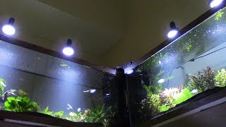 how to high tech low tech planted aquarium tanks by kevin