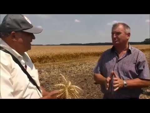 Збирання Ранніх Зернових | Жнива 2019 Полтавська область | Україна