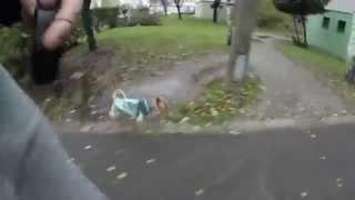Yorkshire Terrier Puppy-walk Around