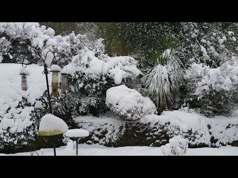 UK Snow Live Stream  - It's snowing again Sunday 10th December 2017