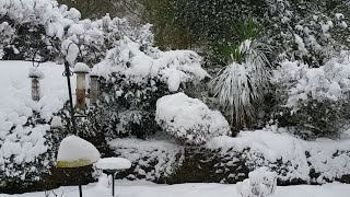 It's snowing Again. UK Snow Live Stream on Sunday 10th 2017. Yes we...