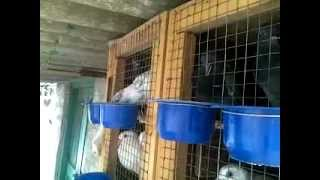 My pigeon cage set-up-2,29022012162.mp4