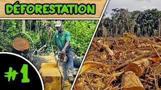 COUPONS-NOUS PLUS D'ARBRES QU'HIER EN AMAZONIE ?