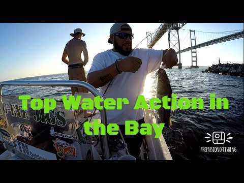 Best Top Water Lure For Striped Bass/ Súper Spook