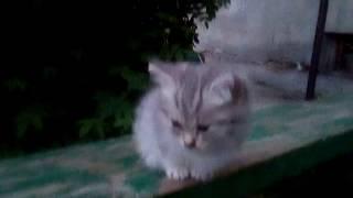 Бездомный котенок.Тяпа.
