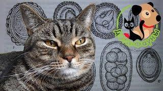 Препараты от глистов для собак и кошек, которые я чаще всего применяю