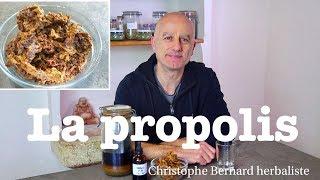 Propolis : mal de gorge, bronchite, immunité basse, cancer
