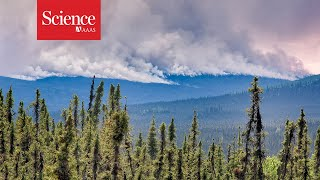 Alaskas forest fires are shifting the regions carbon balancesometimes for the better