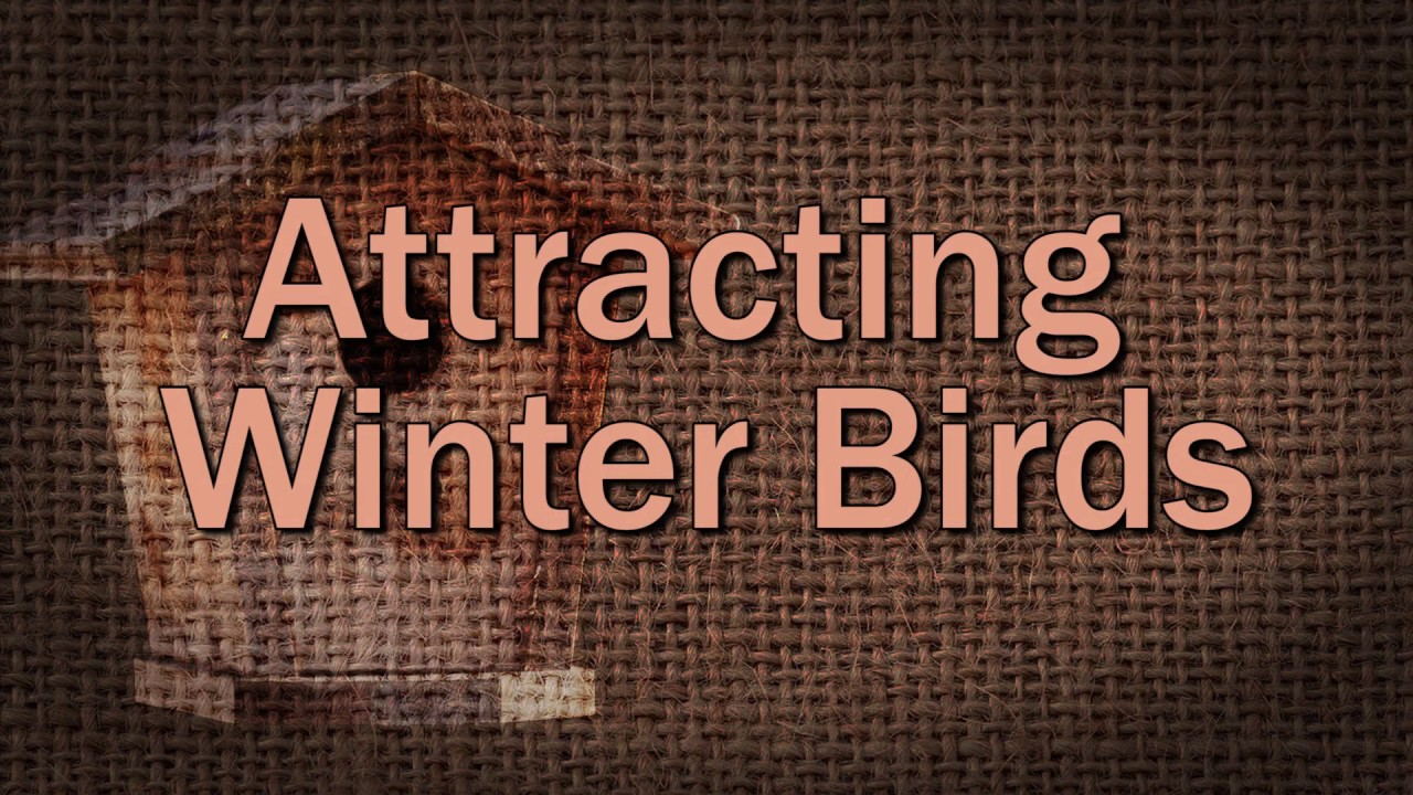Attracting Winter Birds - Family Plot - YouTube