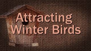 Attracting Winter Birds - Family Plot
