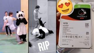 IronWolf 10TB Hard Drive & Panda Gets Dropped