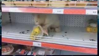 Подборка видео приколов про животных Ржака