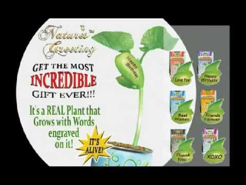 Magic Bean Plant - Friends Forever | Best Teacher | Congratulations