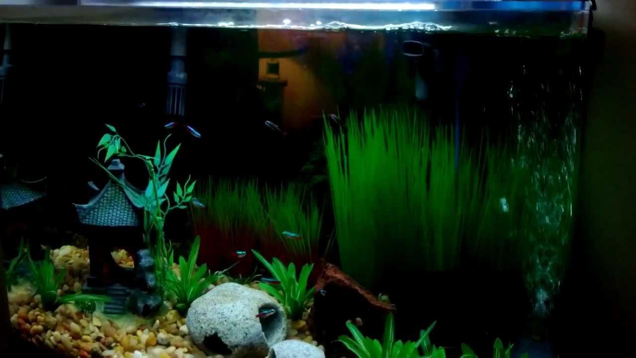 Seaclear rectangular 20 gallon aquarium combos 1000 for Sea clear fish tank