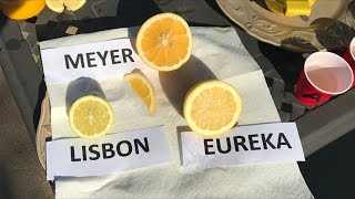 Meyer vs. Eureka vs. Lisbon |  TASTE TEST |  80% Of People Prefer The ?????? Lemon