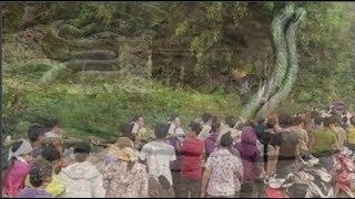 """Chuyện ly kỳ về cặp """"rắn thần"""" song sinh tại hai ngôi đền thiêng"""