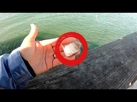 Pier Fishing With CUT BAIT (Catch Clean Cook)