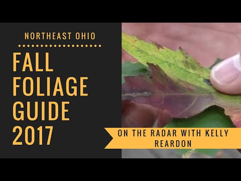 Fall foliage guide 2017 for Northeast Ohio: On the Radar with Kelly Reardon