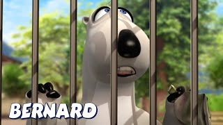 Download Bernard Goes To The Zoo! AND MORE | Bernard Bear | Cartoons for Children | Full Episodes