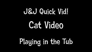 Quick Vid - Cat Video - Playing in the Tub